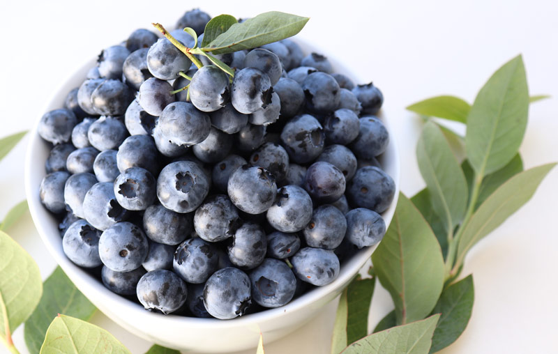 fresh oregon grown blueberries from Hurst berry farms