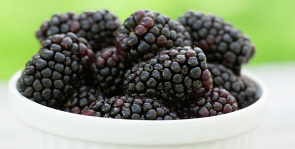 Fresh Blackberries Hursts Berry Farm