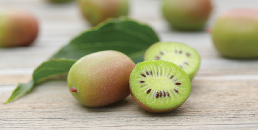 Fresh Kiwi Berries Hursts Berry Farm